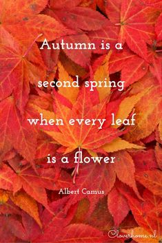 Autumn is a second spring when every leaf is a flower; quote by Albert Camus - Cloverhome.nl