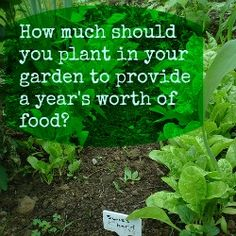 How much should you plant in your garden to provide a year's worth of food? | The Well Fed Homestead