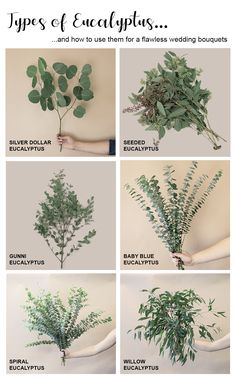 Types Of Flowers, Cut Flowers, Dried Flowers, Floral Wedding, Wedding Bouquets, Wedding Flowers, Wedding Greenery, Rustic Wedding Centerpieces, Diy Wedding Decorations
