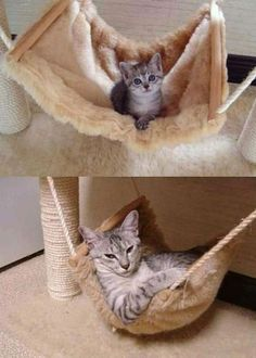 clearly, D needs a cat hammock.
