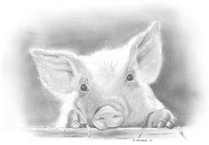"Items similar to Piglet print - ""Cutest Little Piglet Ever"" - 5 x 7 print of my original hand-rendered graphite drawing on Etsy"