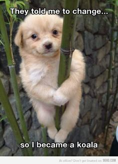 who would tell a little and beautiful little puppy to change that is just rood i would say stay how you are adorable!!!
