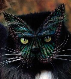 painted cats - Google Search