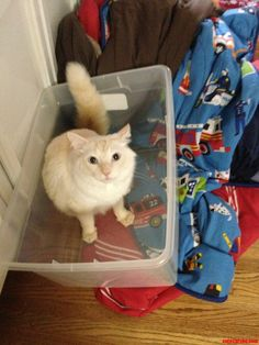 Kitty In A Tub. - http://cutecatshq.com/cats/kitty-in-a-tub/