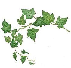 ivy spine tattoo - Google Search Half Sleeve Tattoo Stencils, Sleeve Tattoos, Ivy Leaf, Flower Art, Planting Flowers, Vines, Plant Leaves, Bullet Journal, Templates