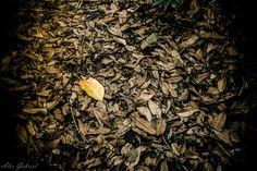 Poema das folhas