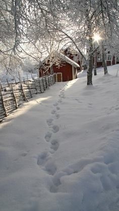 Footprints in the snow......leading Home.....