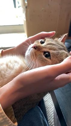 Funny Cute Cats, Cute Baby Cats, Cute Little Animals, Cute Cats And Kittens, Cute Funny Animals, Kittens Cutest, Cute Dogs, Cute Babies, Big Dogs