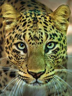 Portrait of a Predator by Sunilpic.twitter.com/eENuTXTtRk