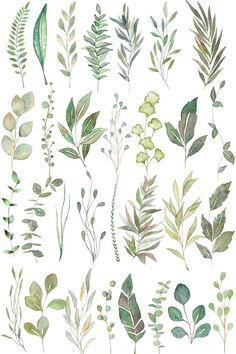 Greenery Line Art Watercolor Clipart, Olive Eucalyptus Branches, Tropical Fine Art Botanical Ink Graphics Green Watercolor, Watercolor Leaves, Watercolour Painting, Watercolor Wedding, Watercolor Illustration, Watercolor Basic, Watercolor Sketchbook, Leaf Drawing, Flower Doodles