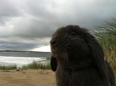 Bunny sniffs the cool sea air - September 13, 2012