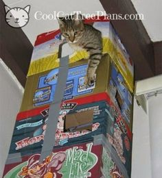DIY Cat Tree Plans. Tips, Ideas And Plans To Build Your Own Cat Tree, Tower Or Condo. Save Money While Keeping Your Cats Happy And Healthy.