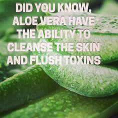 Curious about aloe vera?