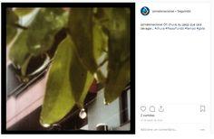 Chuva- detalhe gota d'água Gota, Instagram, May 31, Rain Fall, Fotografia