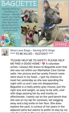 SAFE❤️❤️ 11/3/17 Hello, my name is Baguette. My animal id is 9826. I am a desexed female gray dog at the Manhattan Animal Care Center. The shelter thinks I am about 4 years 1 weeks old. I came into the shelter as a stray on 15-Oct-2017. http://nycdogs.urgentpodr.org/baguette-9826/