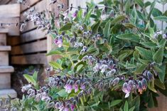 Colors & Textures of California Native Plants: Native Plants through a Modern Lens at Madroño