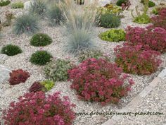Mulched with gravel, these grasses and Sedum thrive... www.drought-smart-plants.com/unh2o-garden.html Water Wise Landscaping, Mulch Landscaping, Landscaping With Rocks, Succulent Gardening, Garden Planters, Organic Gardening, Drought Tolerant Landscape, Garden Show, Terrace Garden