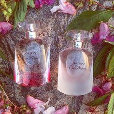 Minäkö keski-ikäinen?: Shiseido Ever Bloom