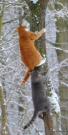Muffi and Zazza play follow the leader in Helsingborg, Sweden • photo: Mats Hamnäs on Flickr