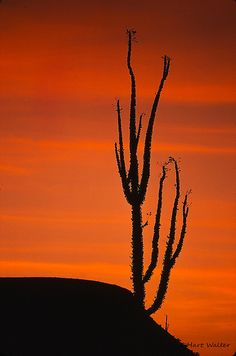 Baja desert Sunset Dec 1974 Image0187 | Flickr - Photo Sharing!