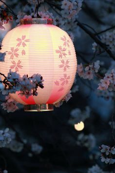 Pink Sakura lamp I would love one of these around my house