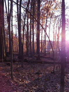 somewhere on my hike in TN