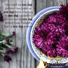 Purple Flowers in Blue Brown and Blue Ceramic Bowl All Flowers Images, Scrapbook Quotes, Afrikaans Quotes, Amazing Flowers, Ceramic Bowls, Purple Flowers, Cabbage, Stock Photos, Plants