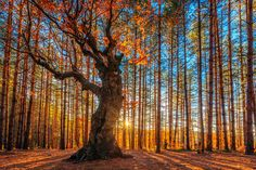 """The King Of the Forest"" by Evgeni Dinev, via 500px."