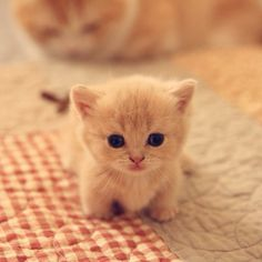 baby kittens, kittens cutest, cats and kittens, baby animals Cute Baby Cats, Cute Little Animals, Cute Cats And Kittens, Cute Funny Animals, Funny Cats, Adorable Kittens, Kittens Cutest Baby, Super Cute Kittens, Baby Pets