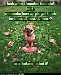 Like every dog I've ever known......