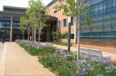 The Nelson Mandela Children's Hospital designed by Green inc Landscape Architecture and created by Life Green Group, located in Johannesburg, Gauteng. Nelson Mandela Children, Hospital Design, Childrens Hospital, Growing Tree, Cool Landscapes, Landscape Architecture, Landscaping, Trees, Success