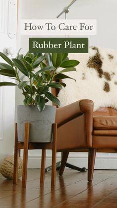 Easy House Plants, Easy Care Plants, Balcony Plants, Garden Plants, Portulaca Flowers, Planting Flowers, Indoor Garden, Indoor Plants, Rubber Plant Care