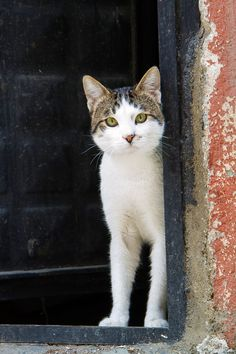 Istanbul cat--She'll be coming round the corner when she comes...