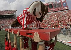 Bucky - one push up for every point scored Hard To Be Humble, Badger Sports, Football And Basketball, Wisconsin Badgers, Bucky, Vintage Gifts, Alma Mater, Photographs, Photos
