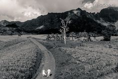 Two lovers walk on the pineapple plantation  http://www.svphotograph.com @svphotograph #svphotograph #weddingphotographers #fearlessphotographers #yourockphotographers #blackandwhite #weddingday #tahitiphotographer #photooftheday #instawedding #aerial #drone