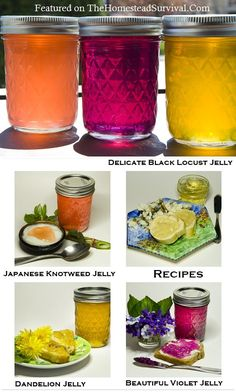 4 Wild Flower Food Foraged Jelly Recipes - Canning | The Homestead Survival
