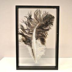 Zwart/witte struisvogel veer ingelijst in een zwart, houten lijst van 40 x 60 cm.