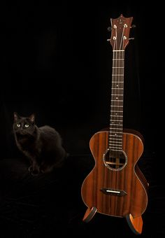 Shop cat - Lichty Guitars' shop cat - MacKenzie