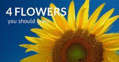 4 Multi-Use Flowers Every Tower Gardener Should Grow