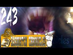 Bigfoot Hotspot Radio - SCEP:243 The Big Thicket Saga [Sasquatch Chronicles]