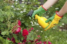 Insecticidal soap could be the answer to your garden pest problems. Organic Soil, Organic Gardening Tips, Organic Fertilizer, Bee Repellent, Watering Raised Garden Beds, Diy Pest Control, Insecticide, Bbq Cover, Organic Gardening