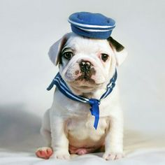 Sailor puppy, how adorable!