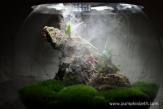 The ultra sonic misting unit in operation inside my Miniature Orchid Trial BiOrbAir Terrarium, as pictured on the January