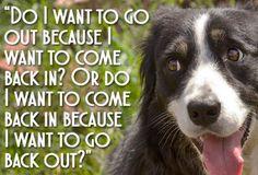 15 Dog Shower Thoughts - Neatorama