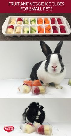 rabbit toy DIY treat - freeze your guinea pigs or bunnys favorite fruit or veggie treat into ice cubes and give them as treats. This helps them cool down on summer days. Remember to always check with your vet before introducing human food to your pets. Rabbit Cages, Bunny Cages, Dog Cages, Diy Bunny Cage, Diy Bunny Toys, Rabbit Cage Diy, Diy Toys For Rabbits, Diy Rat Toys, Guinea Pig Food
