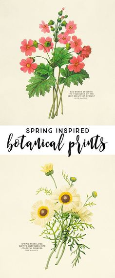 Pretty Free Spring Printables: Spring Art For Your Home!