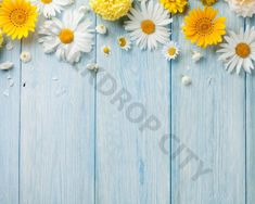 Imagens, fotos stock e vetores similares de Garden flowers over blue wooden table background. Backdrop with copy space - 457841500 Flower Background Images, Flower Backgrounds, Wallpaper Backgrounds, Spring Backgrounds, Wood Wallpaper, Laptop Wallpaper, Flower Wallpaper, Chrysanthemum Flower, Photography Backdrops