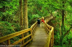 Ruta de las pasarelas en el río Mao #RibeiraSacra #Ourense #Spain by @acastinheira via Twitter Cool Magazine, Andalucia, Garden Bridge, The Good Place, Places To Go, Beautiful Places, Spain, Hiking, Outdoor Structures