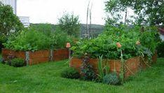 26 Great ideas for a vegetable garden in DIY wooden beds Raised Garden Beds, Raised Beds, Pallet Collars, Vegetable Bed, Wooden Diy, Wooden Beds, Garden Cottage, Edible Garden, Herb Garden