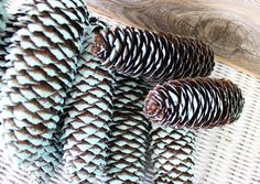 Coastal Christmas Aqua Tipped Pinecones  Large by ElaLakeDesign #pinecones #coastalchristmas #elalakedesign.etsy.com